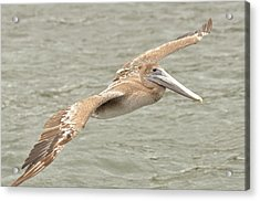 Acrylic Print featuring the photograph Pelican On The Water by Rick Frost