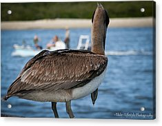Pelican People-watching Acrylic Print