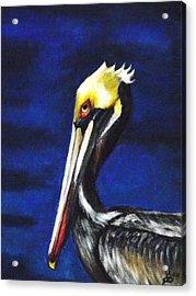 Pelican Portrait Acrylic Print by Kim Selig