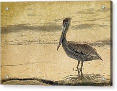 Pelican Acrylic Print by Rebecca Cozart