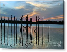 Acrylic Print featuring the photograph Pelican Resting End Of Day by Dan Friend
