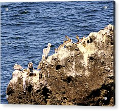 Pelican Rock Acrylic Print by Chris Anderson
