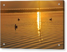 Pelicans And Sunrise Acrylic Print