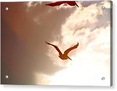 Pelicans At Sunset Acrylic Print by Lori Leigh
