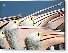 Pelicans (eyes Have It) Acrylic Print by An Gobán Saor