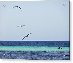 Pelicans In Flight Over Turquoise Blue Water.  Acrylic Print