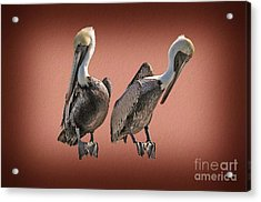 Acrylic Print featuring the photograph Pelicans Posing by Dan Friend