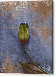 Penchant Naturel - 07at04b3 Acrylic Print by Variance Collections