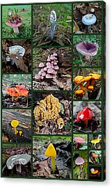Pennsylvania Mushrooms Collage 2 Acrylic Print by Mother Nature