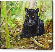 Pensive Panther Acrylic Print