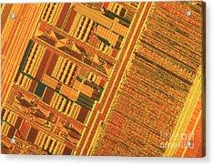 Pentium Computer Chip Acrylic Print by Michael W. Davidson