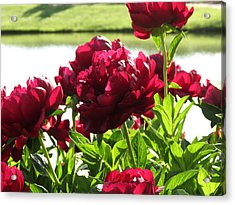Acrylic Print featuring the photograph Peony Burgandy by Rebecca Overton