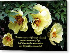 Peony Friends Acrylic Print by Deborah  Crew-Johnson