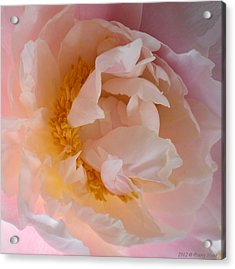 Acrylic Print featuring the photograph Peony Pink by Penny Hunt