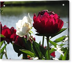 Acrylic Print featuring the photograph Peony Sunlit by Rebecca Overton
