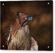 Pepe On Wood Acrylic Print