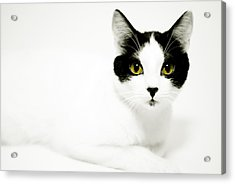 Pepper Acrylic Print by Anthony Citro