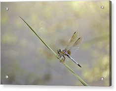 Acrylic Print featuring the photograph Perched Dragon In Sepia by JD Grimes