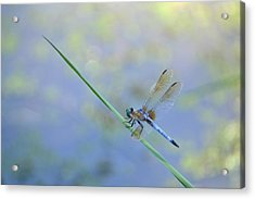 Acrylic Print featuring the photograph Perched Dragon by JD Grimes