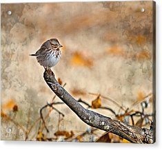 Perched High - Baby Sparrow Acrylic Print by J Larry Walker