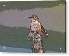 Perched Hummingbird- Abstract Acrylic Print by Tim Grams