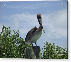 Perched Pelican Acrylic Print