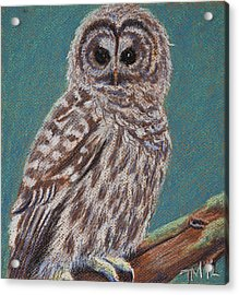 Perching Spotted Owl Acrylic Print by Thomas Maynard