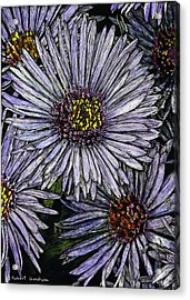 Perennial Asters Acrylic Print by Robert Goudreau