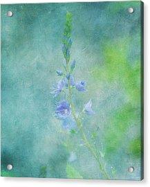 Perfect Dream Acrylic Print by Kim Hojnacki