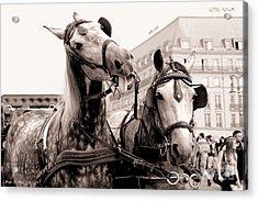 Performing Horses Acrylic Print by Helge Peters