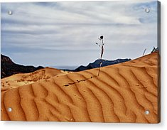 Perseverance Acrylic Print by Stephen Campbell
