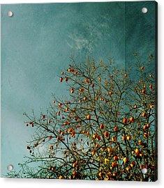 Persimmon B O U N T Y Acrylic Print by Paul Grand Image