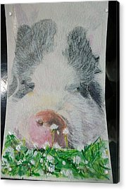 Pet Portrait Original Pig N Meadow Watercolor 4 X 6 Inch U Provide The Picture Or Idea Made To Order Acrylic Print