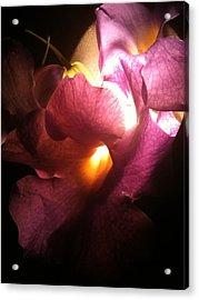 Petal Glow Acrylic Print