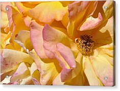 Petal Profusion Acrylic Print by Sandy Fisher