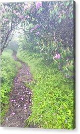 Petaled Path Acrylic Print by Rob Travis