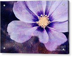 Petaline - 06bt04b Acrylic Print by Variance Collections