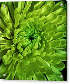Petals Of Green Acrylic Print by Bruce Bley