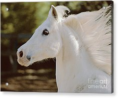 Acrylic Print featuring the photograph Pete by Doug Herr