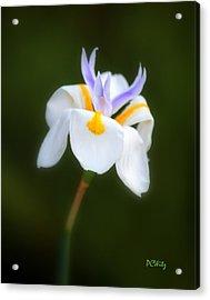 Petite Flower Acrylic Print by Patrick Witz