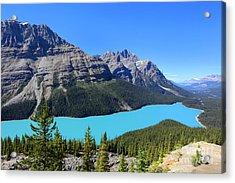 Peyto Lake Alberta Canada Acrylic Print