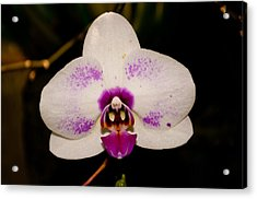 Acrylic Print featuring the photograph Phalaenopsis White Orchid by Tikvah's Hope