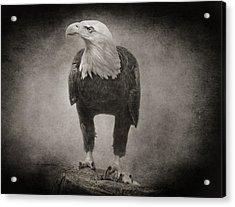 Philadelphia Eagle Acrylic Print