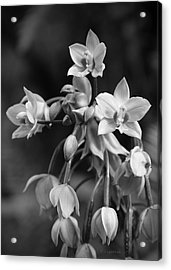 Acrylic Print featuring the photograph Philippine Orchids In Black And White by Kerri Ligatich