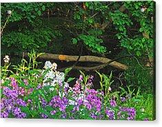 Phlox Along The Creek 7185 Acrylic Print by Michael Peychich