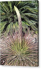 Phoenix Spire Acrylic Print by Robert Meyers-Lussier