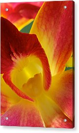 Photograph Of A Hope Orchid Flower Acrylic Print