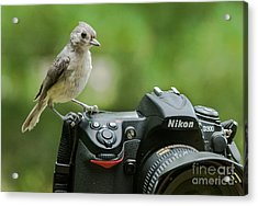 Photographer's Little Helper Acrylic Print