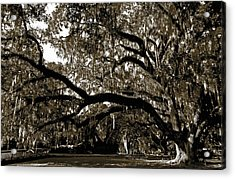 Acrylic Print featuring the photograph Picnic Under The Oak by DigiArt Diaries by Vicky B Fuller