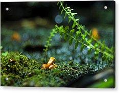 Pico Acrylic Print